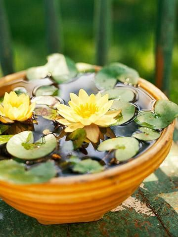 How to create Tabletop Water Gardens ... make one of seven miniature displays in just minutes!: Container Water Garden, Garden Ideas, Water Gardens, Water Features, Watergardens, Water Lily, Tabletop Water, Water Lilies