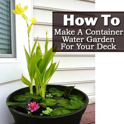 How To Make A Container Water Garden For Your Deck: Container Water Gardens, Container Garden, Container Pond, Flowers Gardening Tips, Baby Steps, Garden Protect, Garden Patio