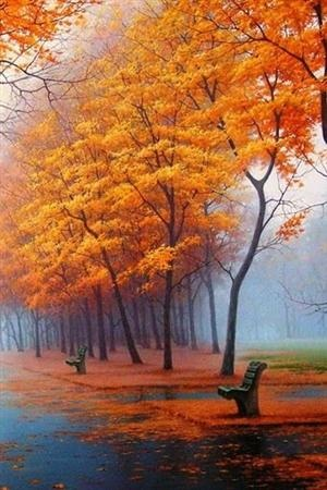 I think this is what the parks here in London would look like in the fall. Colourful, and still wet....: Bench, Autumn Fall, Beautiful, Art, Trees, Autumn Photo, Autumn Color, Autumn Colour