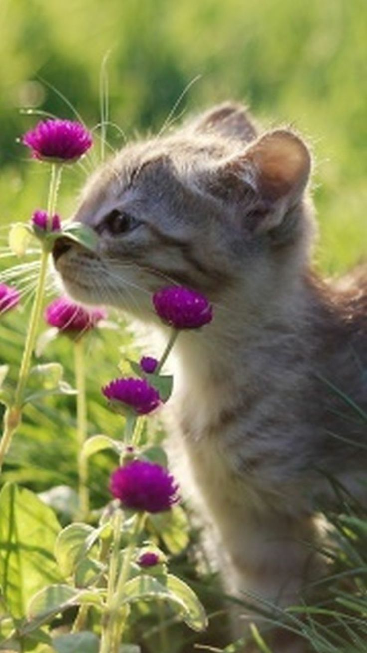 "Kitten and pink flowers.  Support ""Southern California Cat Adoption Tails"" www.catadoptiontails.org.: Kitty Cats, Sweet, Kitty Kitty, Chat, Kittens Cats, Cute Kittens, Animal"