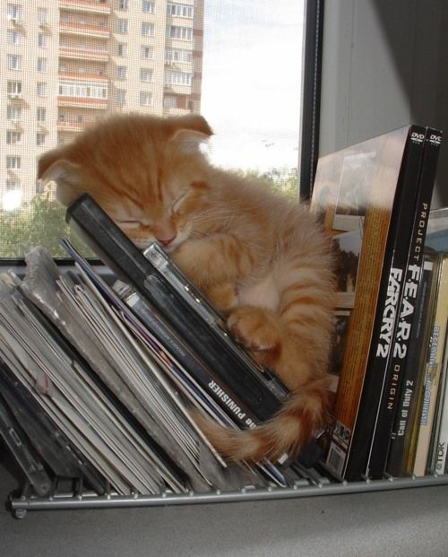 Kittens and books. :): Cats, Animals, Sweet, Cat Nap, Pet, Book, Kittens, Kitty