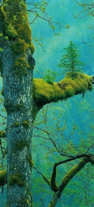 Land of the Giants (Tree on Tree, Northern California): Color, Trees, Forest, Nature S, Places, Beauty, Photo