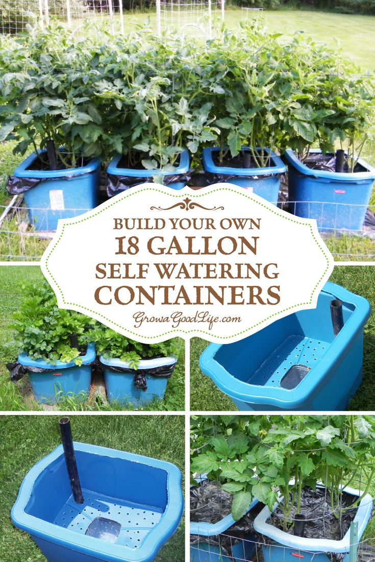 Many versions of self watering containers, also known as self watering grow boxes, self watering pots, and self watering planters are sold online, but you can make them yourself for a fraction of the cost out of some easy to find items.: Great Garden Ligh