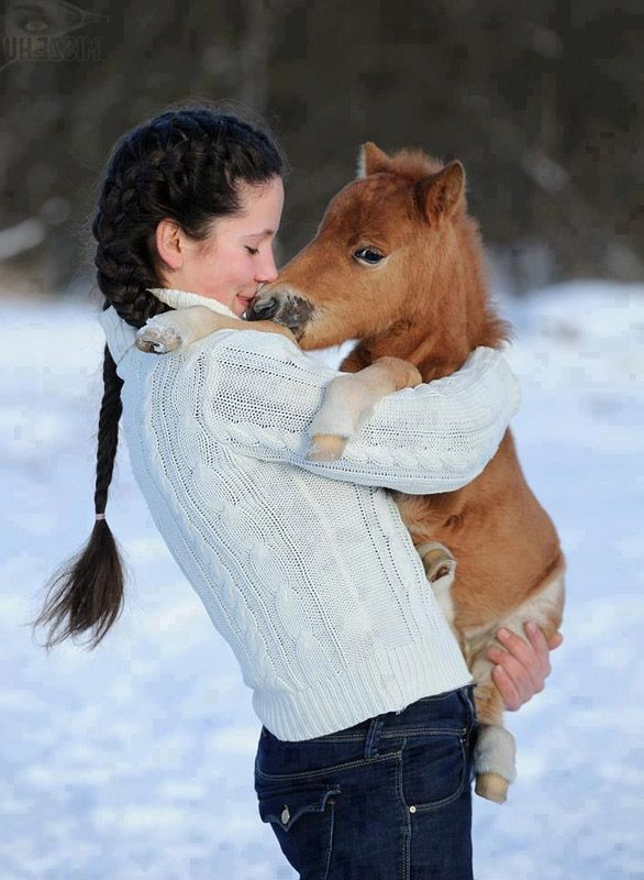 MINI HORSE.    ***** Referenced by 1 Dollar Website Hosting  (WHW1.com):  Affordable, Reliable, Fast, Easy, Advanced, and Complete, and FREE Sites (ask).©: Sweet, Country Girl, Miniature Horses, So Cute, Mini Horses, Friend, Animal
