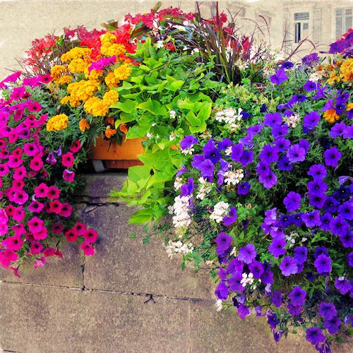 Most Beautiful Flower Arrangements | Recent Photos The Commons Getty Collection Galleries World Map App ...: Container Garden, Windowbox, Outdoor, Pretty Color, Beautiful Color, Color Combination