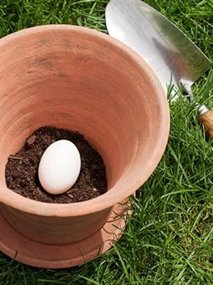 Place one uncracked raw egg in the pot — as it decomposes, it will serve as a natural fertilizer via Redbook - Click image to find more Gardening tips: Green Thumb, Gardening Ideas, Gardening Outdoor, Place, Uncracked Raw