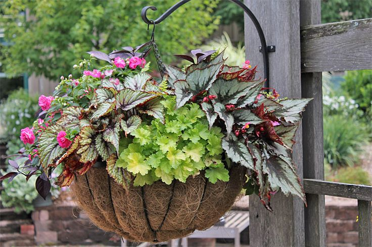 Planter Idea Book, Container Gardens, Pots, Planters, Windowboxes, Hanging Baskets: Gardener's Supply: Container Gardens, Gardens Hanging Containers, Gardeners Supply, Container Gardener S, Idea Book, Container Gardening, Hanging Baskets, Create Plant