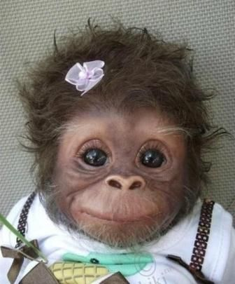 Precious!: Babies, Animals, Sweet, So Cute, Pet, Funny, Baby Monkeys, Adorable