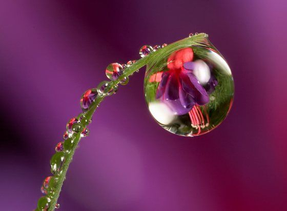 Reflections, reflections, reflections.: Water Drops, Macro, Waterdrop, Dewdrops, Dew Drops, Water Droplets, Photo, Flower, Rain Drop