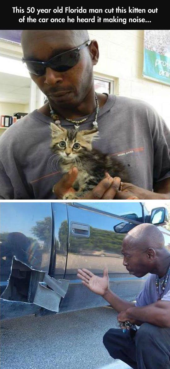 Rescuing The Little Kitten: Face, Kitten, Humanity Restored, Funny Cat, Faith, Florida Man, Arealman, Animal