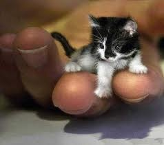 schattige dieren - Google zoeken: Cats, Animals, Smallestcat, 2 Year Old, Kittens, Smallest Cat, Kitty