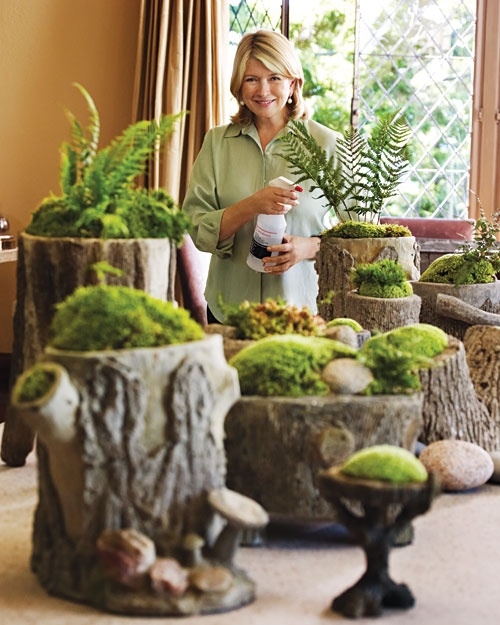 Site demos moss gardens... could be a really cool project to start this year and use in the wedding next year. Love this idea!: Idea, Tree Stumps, Log Plants, Plant Moss, Outdoor, Terrarium, Moss Gardens, Martha Stewart, Fairy Garden