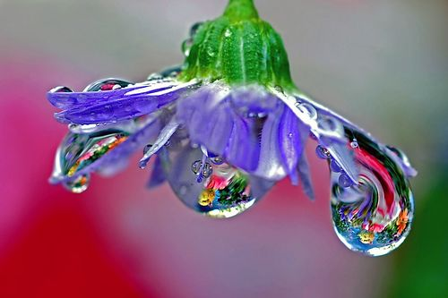 soaking wet flower by Steve took it, via Flickr: Water Drops, Nature, Waterdrop, Raindrop, Dewdrops, Dew Drops, Flowers, Photo, Rain Drop