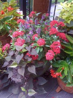 "This site has great ideas for plant combos for your flower beds or for containers.  In containers, put a ""thriller"" (something tall), a ""filler"" (plants to fill in the middle), and a ""spiller"" (plants that trail over the edge).: Ga"