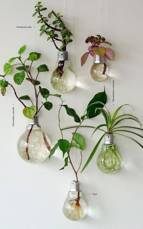 upcycled light bulb vases http://sulia.com/my_thoughts/84b2fd04-379f-4938-b5e7-233481225453/?source=pin&action=share&ux=mono&btn=big&form_factor=desktop&sharer_id=0&is_sharer_author=false: Lights, Ideas, Craft, Plants, Gardens, Lig
