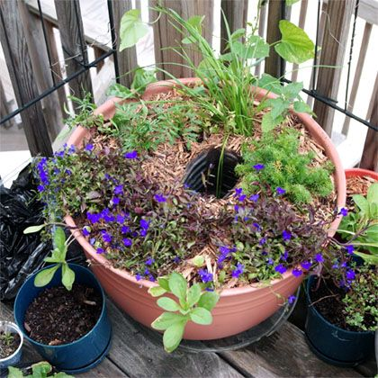 Use an inverted plastic bottle to irrigate your planters this summer! Keep your container garden happy through long hot days with a hidden water reservoir.: Diy Water, Container Garden, Plastic Bottles, Water Reservoir
