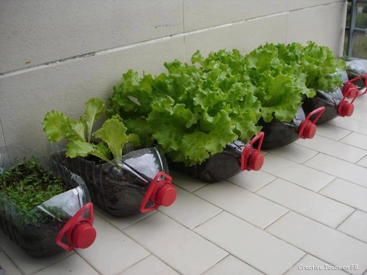 Use bottled five gallons of water and cultivate what you want-25 DIY Ideas to Recycle Your Potential Garbage: Plastic Bottle, Garden Ideas, Gardening Ideas, Outdoor, Mini Garden, Gardens, Diy, Garden