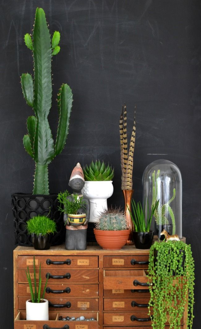 vintage wooden file cabinet / plants n stuff: Urban Jungle, House Plants, Succulent, Green, Houseplant, Jungle Bloggers, Black Wall, Room