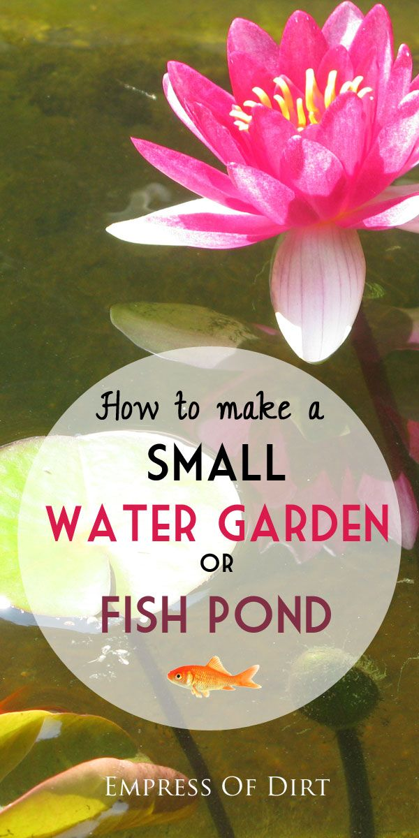 Want to make a little pond? This shows you everything you need to get started. And don't worry: it's easy! #spon: Watergardens Ponds, Water Gardens, Waterfeatures, Small Water Garden, Water Features, Water Ponds, Garden Ponds, Small Ponds