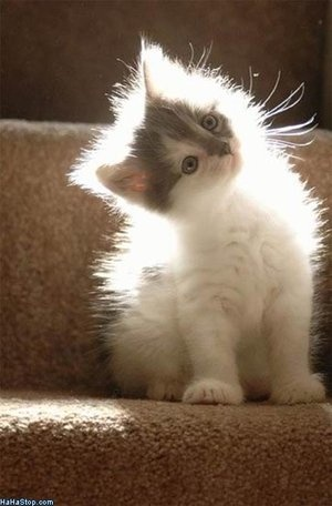 What you looking at?: Kitty Cats, Sweet, Meow, Adorable Animals, Pets, Kitty Kitty, Kittens, Things, Kitties