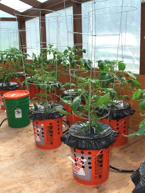 With these grow buckets you can grow tomatoes, peppers and any number of plants with very minimal effort.: Growing Tomato, Garden Adventure, Grow Tomatoes, Idea, Alaska Garden, Alaska Grow, Grow Buckets, Gardening, Self Watering