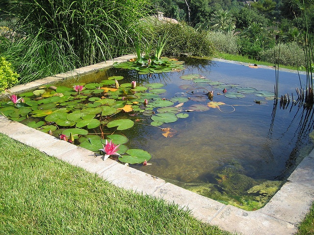 Would love to have a pond like this!: Gardening Landscaping Ponds, Flickr, Backyard Ponds, English Gardens, Garden Ponds, Photo, Garden
