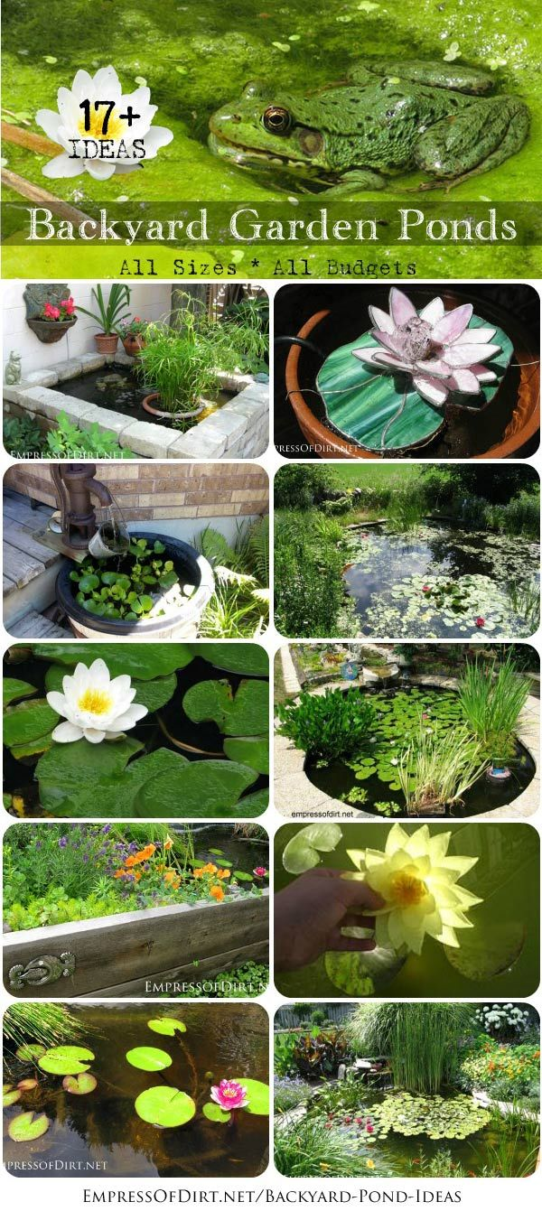 Would you love birds, bees, and butterflies to call your garden party central? Add a #backyard pond! From small containers to large inground pond with waterfalls, these ideas will get you started http://empressofdirt.net/backyard-pond-ideas/: Pond Ideas,