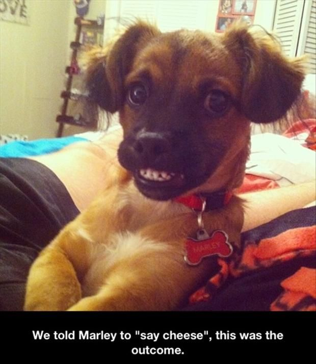 a-funny-pictures-dogs1.jpg 620×714 pixels: Funny Animals, Dogs, Funny Picture, Puppy, Cheese, Funnies, Smile