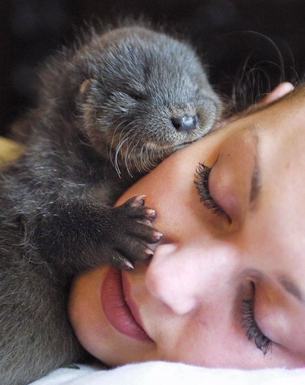baby otter: Face, Babies, Animals, Sweet, Baby Otters, Pet, Adorable, Otter Hug