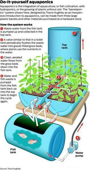 @ Beth Olliff - Aquaponics - this is the article I was telling you about!: Projects, Garden Ideas, Stuff, Diy'S, Aquaponics Hydroponics, Aquaponics System, Gardening, Diy Aquaponics