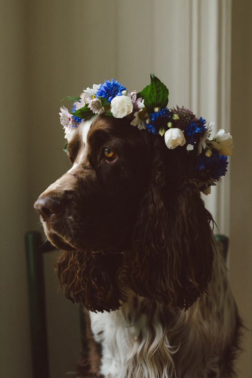 delta-breezes:  Babes in Boyland   Lovely Life: Flower Crowns, Animals Dogs, Doggies, Pets, Creatures, Flower Power, Friend