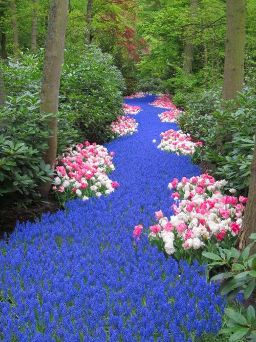 Flower stream ~ you can scale this down if you have a small piece of land. Maybe even install one of those small bridges across the faux-stream for a wonderful path thru the yard/property. It's so beautiful!: Idea, Nature, Beautiful, Holland, Gardenin