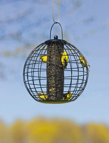 Globe Cage Feeder - lets small birds dine in safety! It's at gardeners.com: Globes, Bird Feeders, Globe Cage, Birds