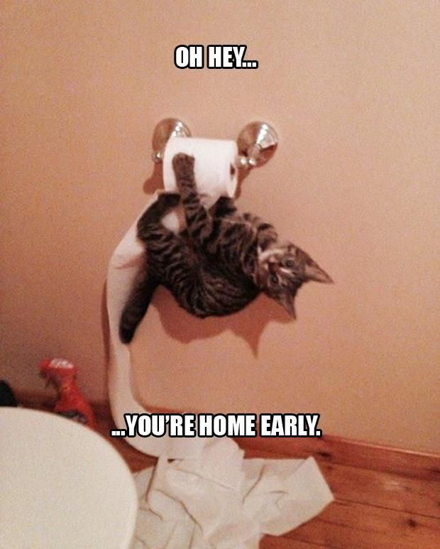 Hehehe!: Cats, Kitten, Animals, Funny Cat, Funny Picture, Crazy Cat, Kitty, Toilet Paper