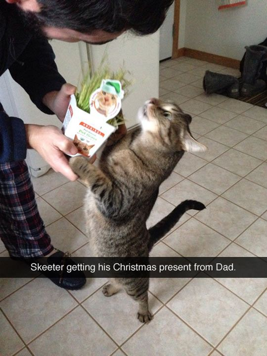 I'm pinning this mainly because I find it hilarious and creepy that someone else has a cat named Skeeter that looks freaking just like mine!!!: Christmas Presents, Funny Cats, Cat Name, Happy Cat, Christmas Cat, Cat Faces, Cat Lady, Animal