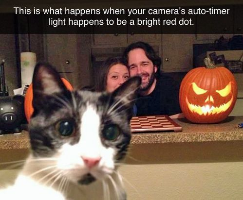 I laughed so hard I almost cried: Cats, Photobomb, Animals, Camera, Funny, Red Dots, Cat Lady