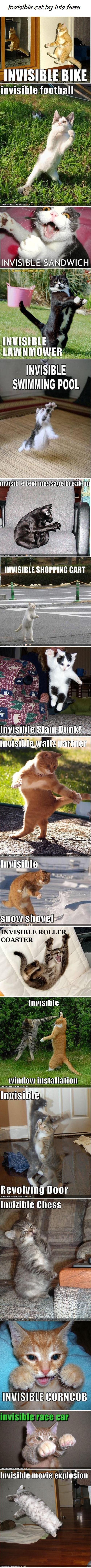 Invisible!  haha.  Love funny cat stuff.  (btw, invisible snow shovel looks more like invisible skis): Funny Animals, Kitty Cat, Funny Cats, Invisible Cats, Crazy Cat, So Funny, Invisible Things, Cats Kittens