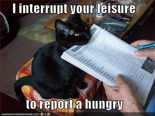 My Emma is bitey, too. She ate the kids homework more than once.: Cats, Animals, Funny Stuff, Humor, Funnies, Kitty, Hungry, Black Cat