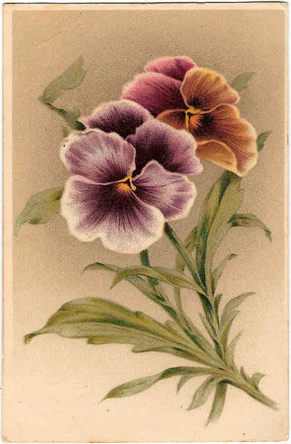 Never base a principle upon your own experience. (Oswald Chambers) Principles and programs and procedures based in our own moments with always fail....: Vintage Postcards, Photos, Pansy, Violets, Vintage Pansies, Botanical, Painting, Vintage Cards, Vintag