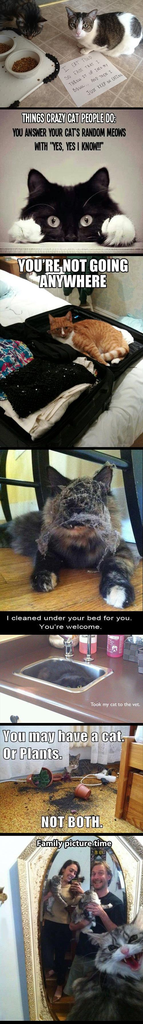 oh cats: Cat People, Crazy Cats, Kitty Cats, Funny Cats, Cat Owners, Car Crash, Cat Lady
