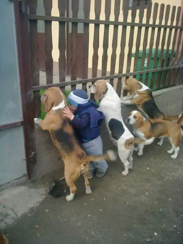 One of these is Not like the other one.... One of these is Not the same..... Sesame Street... hahaha: Puppies, Animals, Friends, Dogs, Pet, Beagles, Funny, Kids, Photo