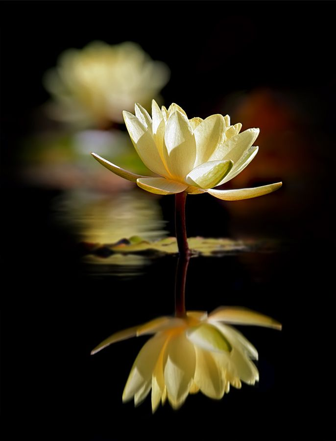 Put thoughts to rest and don't seek outwardly anymore. When things come up, then give them your attention; just trust what is functional in you at the moment, and you have nothing to be concerned about.  ~ Zen Master Linji: Lights, Inspiration, Souls,