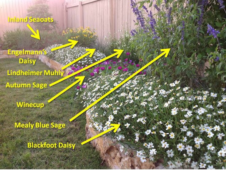Some native Texas plants. Heat and drought tolerant, which means low maintenance!: Backyard Ideas, Landscaping Ideas, Texas Plants, Landscape Flower Gardening, Garden Ideas, Drought Tolerant Plants, Landscapes Gardening Outdoors, Gardening Outdoor Ideas,