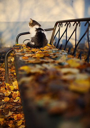 Sometimes I wonder what it would be like to be a cat and not worry about life today! No bills, no work, not a care in the world, just run around and be free to go wherever you want!: Cats, Animals, Kitty Cat, Kitten, Fall, Autumn Cat, Photo