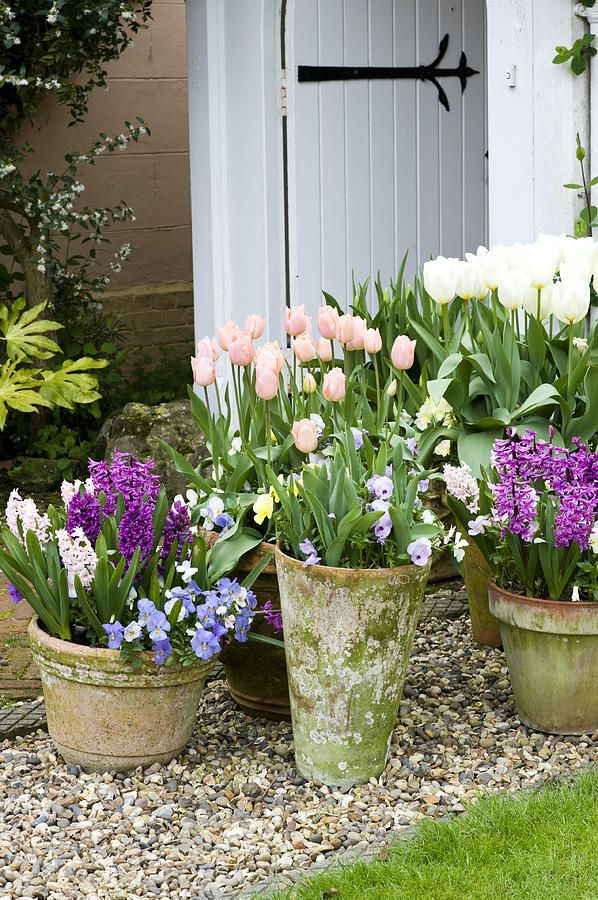 Spring Tulips, Pansies & Hyacinths: Container Gardens, Idea, Spring Flower, Pots I, Deer Fencing, Gorgeous Spring, Garden, Container Gardening