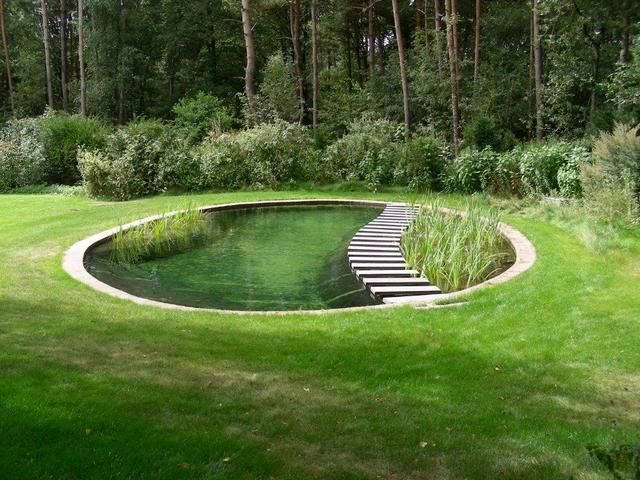 stepping stones dividing plant area from swimming area: Pond Design, Swimming Pools, Pond Idea, Yard Idea, Water Features, Natural Pools, Waterfeature, Swimming Pond