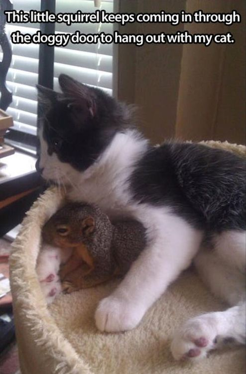 That's more adorable than anything that's ever happened.: Cats, Animals, Kitten, Friends, Sweet, Squirrels, Pet, Funny, Kitty