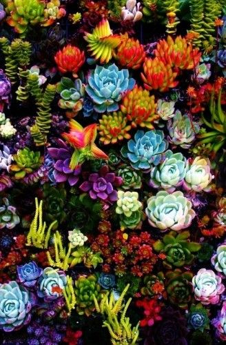 The Top 5: Spectacular Succulents - look at some of the gorgeous colors in this pic!!! I'd love to know what some of these are!: Succulents Garden, Idea, Outdoor, Colorful Succulent, Plants, Gardens, Flower