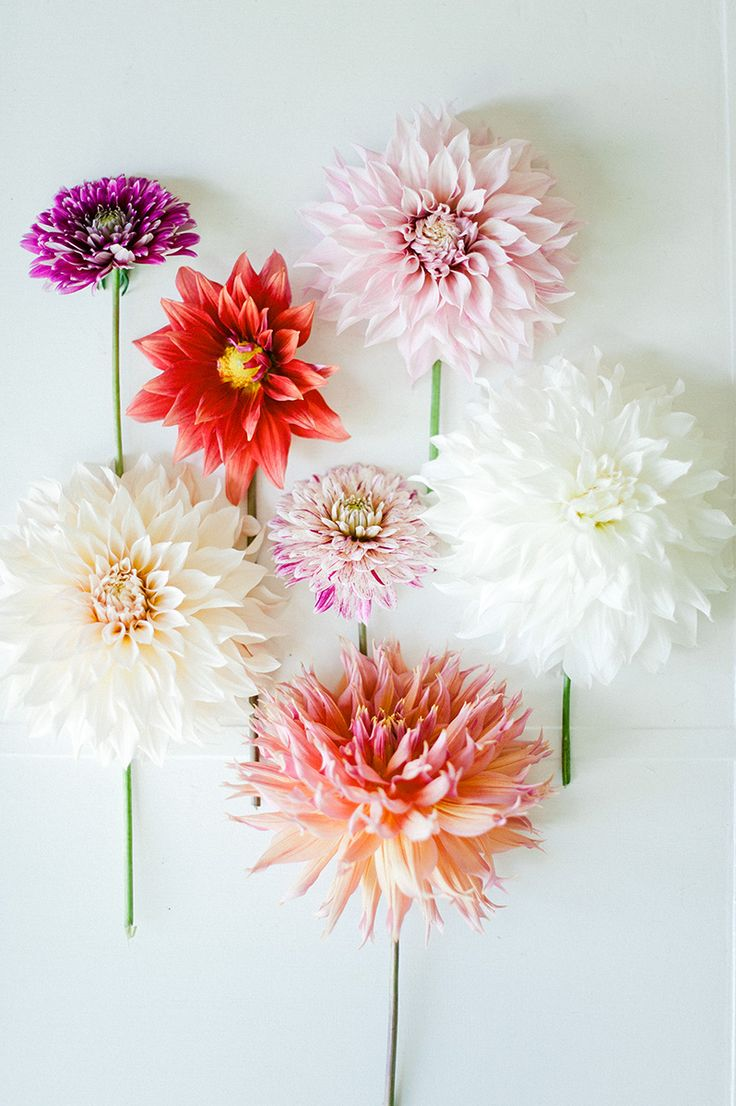 These always put a smile on my face.: Dahlia Flowers, Beautiful Dahlias, Color, Dahlias Flowers, Flower Power, Pretty Flower, Floral, Flower