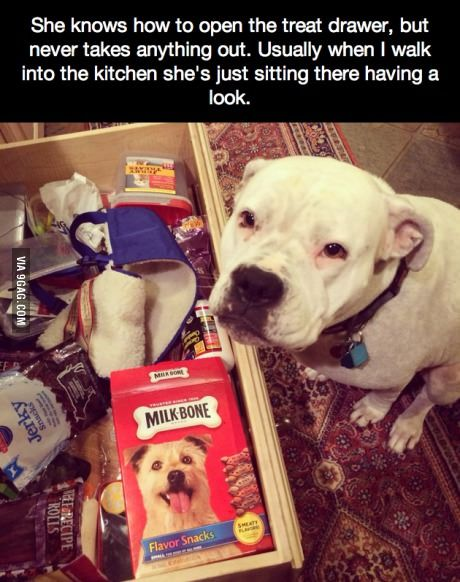 they are pretty smart...sometimes..lol: Treats, Animals, Treat Drawer, Dogs, Pitbull, Good Girl, Pit Bull, Funny Animal